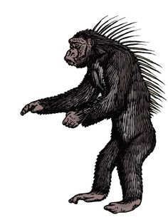 Quilled chimpanzee- African cryptid: an ape that appeared exactly like a regular chimpanzee except long tufts of hair on their back that were raised when agitated or excited. These strange apes were reported by several soldiers while stationed in Africa. This report has yet to be confirmed.