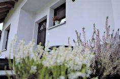 Dom Osiek Jasielski I - Budowa domów szkieletowych kanadyjskich Rzeszów - Daszer - daszer - Budowa domów szkieletowych kanadyjskich Rzeszów – Daszer – daszer Plants, Plant, Planets