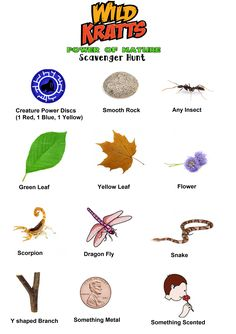 Made this Wild Kratts Scavenger hunt and printed for all the kids and attached to bags..(I hid printed creature power discs,  toy snakes, scorpions, and fireflies)