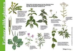 Edible Wild Plants, Color Meanings, Nature Journal, All Nature, Fauna, Outdoor Life, Botany, Cactus Plants, Herbs