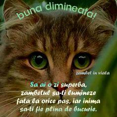 Joi, Good Morning, Gatos, Tricot, Good Day, Bonjour, Buongiorno