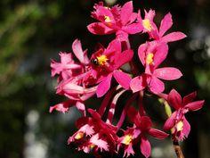 Orquidea --{ Flowers }--