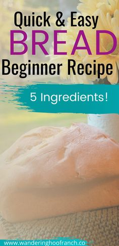 Quick and Easy Bread Recipe for Beginner Bakers Easy White Bread Recipe, Easy Bread Recipes, Baking Recipes, Keto Recipes, Beginners Bread Recipe, Recipes For Beginners, Fall Dinner Recipes, Fall Recipes, Holiday Recipes