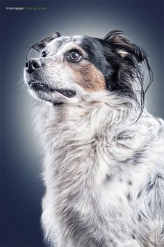 I'd love to do a series of dog portraits like this