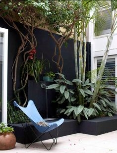 .A courtyard wall can be painted black and plants grouped together to provide an intimate space