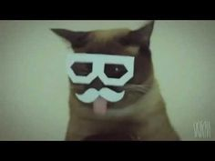 don't feel inspired? take this! )   10 hours HIPSTER DUBSTEP CAT!!!