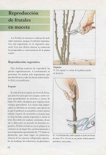 El limonero es un árbol perteneciente a la familia Rutaceae.  El limoneropresenta espinas muy cortas y fuertes. Las hojas desprenden olor...