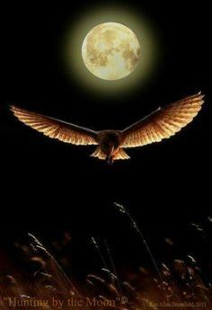 Nature Owl flying in sight of a full moon Also :you can take photography classes  Feel free to visit www.spiritofisadoraduncan.com or https://www.pinterest.com/dopsonbolton/pins/