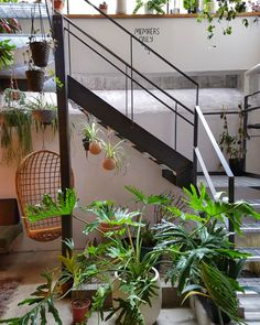 Benk + Bo cafe and co-working space in east London, filled with plants.