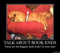 Dogs sat like this by them self just had to put book in yolo