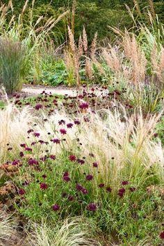 Simple Prairie Garden - Etchingham East Sussex UK - Jo Thompson Landscape and Garden Design