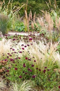 Simple Prairie Garden - Etchingham East Sussex UK - Jo Thompson Landscape and Garden Design