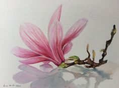 Original watercolor painting MAGNOLIA pink flower by AnnaNwatercolors on Etsy https://www.etsy.com/listing/564607013/original-watercolor-painting-magnolia