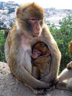 Monkeys on the Rock of Gibraltar: http://www.traveladdicts.net/2008/11/gibraltar.html#more