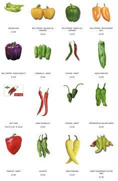 50 rote Paprika Samen Chili Capsicum frutescens Bio-ZP