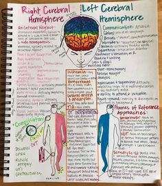 The brain stroke is responsible for coordinating every action and thoughts that in its through our body. Occupational Therapy Schools, Physical Therapy Student, Pediatric Physical Therapy, Physical Therapist, Speech Language Pathology, Speech And Language, Nbcot Exam Prep, Acute Care, Pediatric Ot
