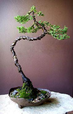 Robusta Gree Juniper - - Robusta green juniper bonsai just after wiring.