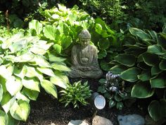 love hostas & buddah.  Backyard around garden pond