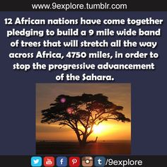 12 African nations have come together pledging to build a 9 mile wide band of trees that will stretch all the way across Africa, 4750 miles, in order to stop the progressive advancement of the Sahara.