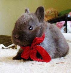 Cute Bunny ❤❤❤