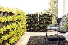 jardin potager vertical de salades et fraises pour éconimiser de l'espace.   Partagé gracieusement par deltadore .
