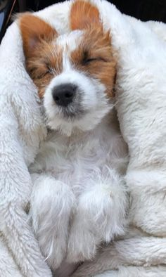 Dog beds can be simple or fancy, expensive or homemade, and everything in between. How do you pick the right dog bed for your pup when there are so many on the market? Does your pooch even need a dog bed? Jack Russell Puppies, Jack Russell Terrier, Cute Puppies, Cute Dogs, Maltese Puppies, Baby Animals, Cute Animals, Wild Animals, Sweet Dogs