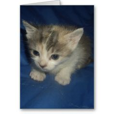 Irresistible Kitty Greeting Cards! #cute #kitten #zazzle #store #cat #meow #customize #gift #present http://www.zazzle.com/conquestkitty*