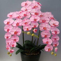Az orchidea virágözön titka