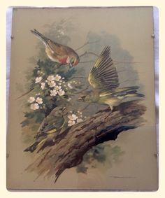 Vintage trio of bird prints