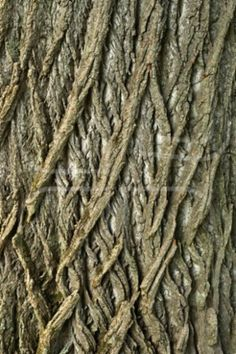 Close up view of a tree trunk with an interesting criss-cross pattern to the bark. Photo by Julianna Olah on Mostphotos. Natural Forms, Natural Texture, Patterns In Nature, Textures Patterns, Wood Bark, In Natura, Tree Bark, Tree Tree, Cross Patterns