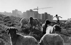 Marc Riboud // Israel, 1973