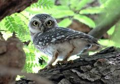Meet the Majestic Owls of New Mexico - NewMexi.Co