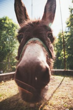 Donkey - http://www.splitshire.com/donkey/