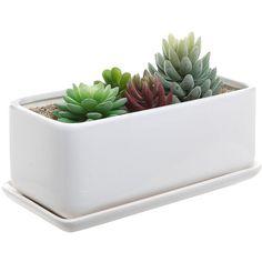 Amazon.com : 10 inch Rectangular Modern Minimalist White Ceramic... ($23) ❤ liked on Polyvore featuring home, outdoors, outdoor decor, garden planters, outdoor garden decor, ceramic planters, white garden pots and garden patio decor