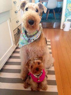 My two terriers Josie & Annie BFFs!