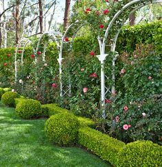 Boxwood hedges and globes border a series of arbors of red climbing roses