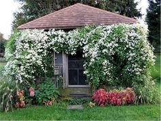 Inspiration for pergola, rock wall along driveway and tennis court fence: Sweet autumn clematis grows up to in a season and tolerates most soil/sun conditions. Can be invasive Hardy Mums, Clematis Trellis, Gladiolus Bulbs, Sweet Autumn Clematis, Meadow Garden, Garden Bulbs, Climbing Roses, Container Flowers, Fruit Garden
