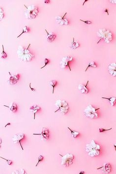 Florals Stocksy United – Royalty-Free Stock Photos – Backgrounds - Gallery by Ruth Black – Backgrounds by Ruth Black