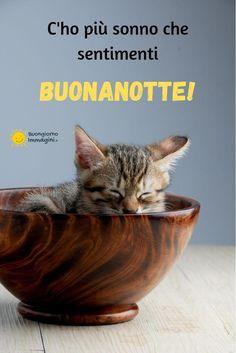 Good Morning Good Night, Day For Night, Cat Sleeping, Pet Health, Say Hello, Sweet Dreams, Kitty, Animals, Mamma