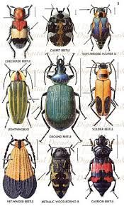 vintage insect prints - Google Search