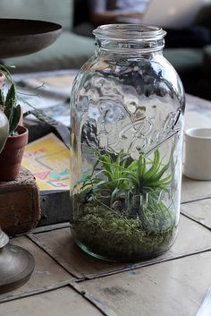 Spider plant terrarium out of jelly jar. Simply sweet.