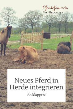 Ein neues Pferd in die Herde integrieren - so klappt es bestimmt!