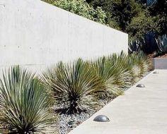 635 drought tolerant landscape Photos