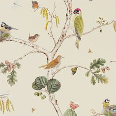 Imported Woodlands Wallpaper This realistic depiction of our favourite British birds was inspired by an 18th century painting of plants and animals. A green woodpecker, a wren, a robin, a thrush and a