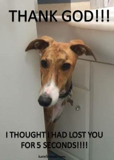 So familiar. Or opening the bathroom door to find them all outside waiting. Greyhounds, whippets, Italian greyhounds !