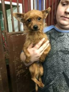 Kijiji - Buy, Sell & Save with Canada's Local Classifieds Wire Haired Terrier, Adoption Options, Pet Resort, Adoption Center, Terrier Mix, Humane Society, Chihuahua, Cuddling, Dogs And Puppies