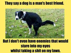Funny Memes – Dog, Man's best friend…