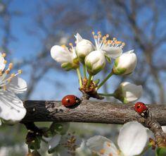 Eindeutig - Der Frühling ist da!