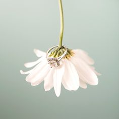 Have your wedding ring shot on a super sweet daisy!