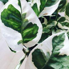 plantsinfocus